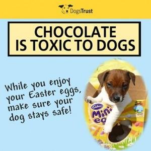 dog easter egg warning
