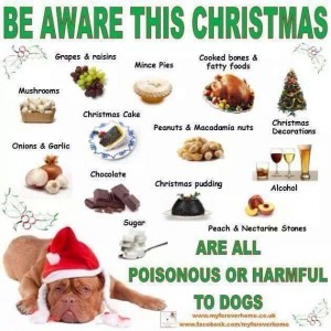 food-for-dogs-to-avoid-at-christmas